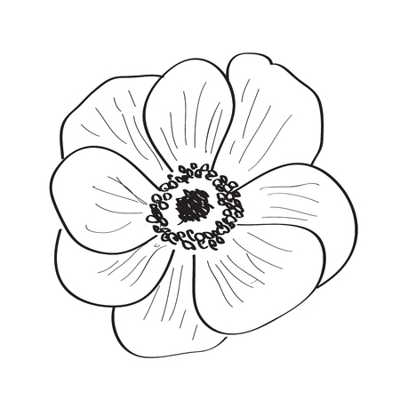 Isolated sketch of a flower. Vector illustration design Banco de Imagens - 125053186