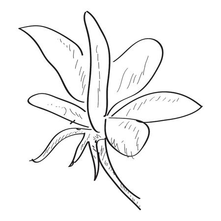 Isolated sketch of a flower. Vector illustration design Banco de Imagens - 125053188
