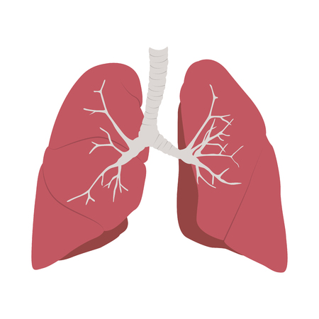 Isolated human lungs image. Vector illustration design