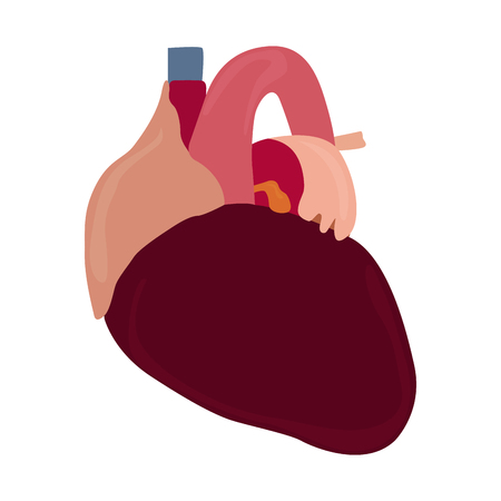 Isolated human heart image. Vector illustration design Illustration