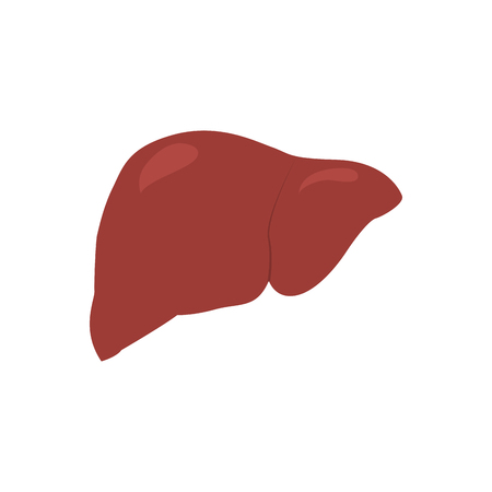 Isolated human liver image. Vector illustration design