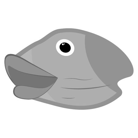 Isolated head fish on white