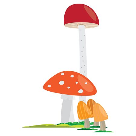 Group of mushroom on a white