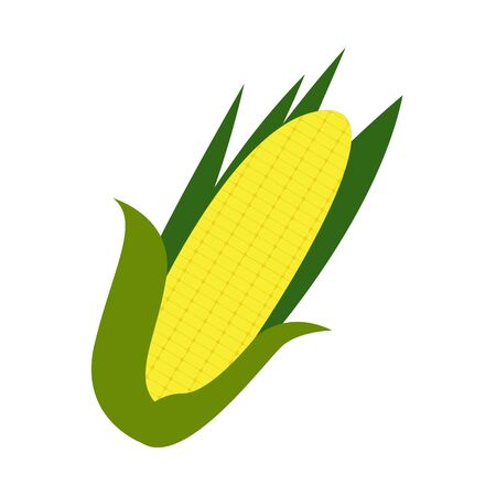Corn cob image on a white background - Vector