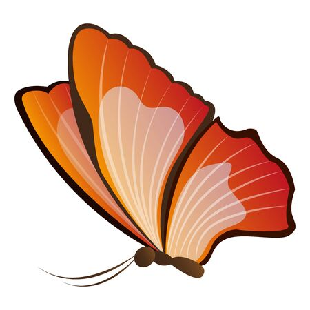 Isolated beautiful butterfly. Beautiful insect - Vector illustration