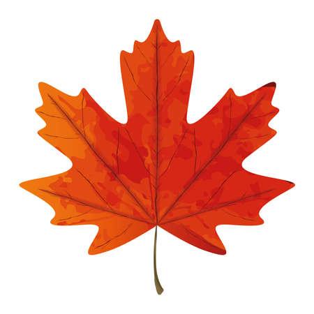 Textured maple leaf. Canadian symbol - Vector illustration