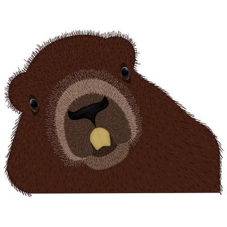 Furry bear cartoon. Wild animal - Vector illustration