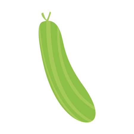 Isolated cucumber icon. Vegetable icon - Salad ingredient - Vector