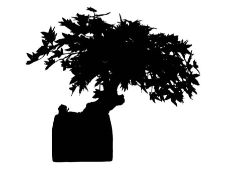 Black and White Silhouette of a Traditional Japanese Bonsai Tree Plant