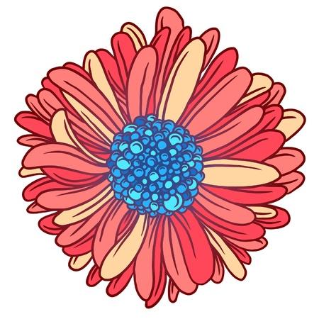 corolla: Background of colorful beautiful flowers gerber  Beautiful pink Gerber Daisy