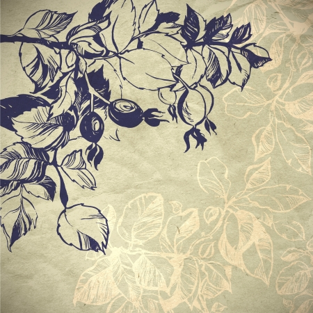 wild rose plant background illustration  the leaves are painted with ink and brush  Vector