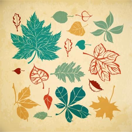 aspen: Set of different leaves on paper background  Autumn leaves Illustration