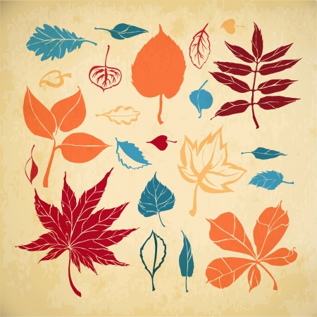aspen: Set of different leaves on paper background  Autumn leaves Illustration