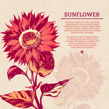 Illustration of sunflower  Vector