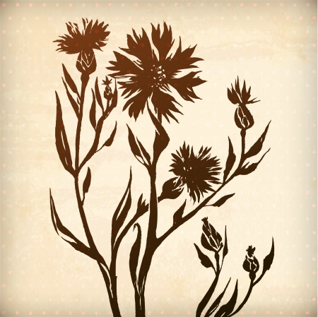 vector ornamental cornflower flower card. illustration drawn with ink and brush. texture of paper and blots. place for your text Illustration