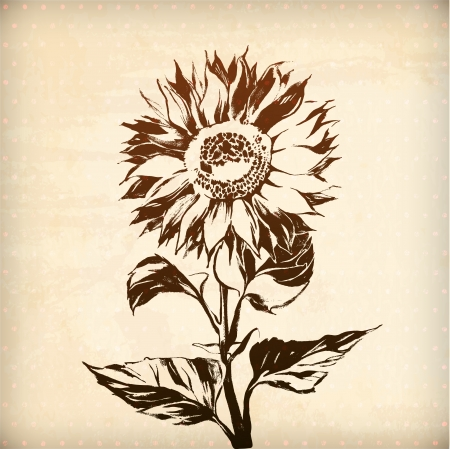 vector ornamental sunflower flower card. illustration drawn with ink and brush. texture of paper and blots. place for your text Ilustração