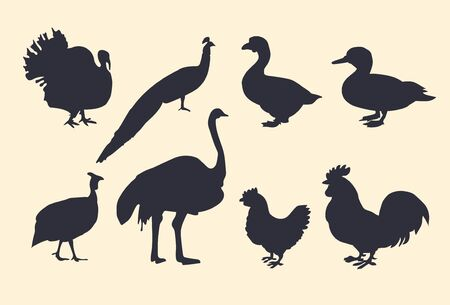Dark vector silhouettes of poultry. Turkey, ostrich, chicken, duck, goose, rooster, Guinea fowl, peacock.