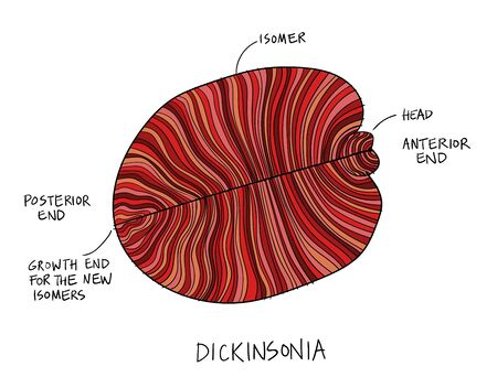 Dickinsonia fossil illustration. Ancient fossil from the Ediacaran Period Sketch with ink and red shades Vettoriali