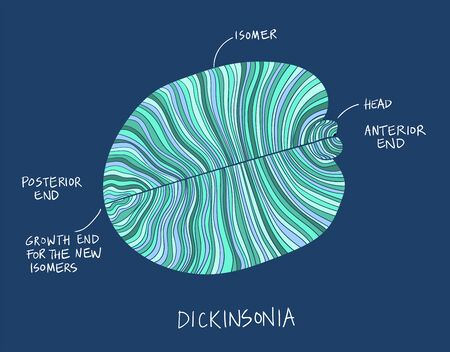 Dickinsonia fossil illustration. Ancient fossil from the Ediacaran Period Sketch with ink and blue shades