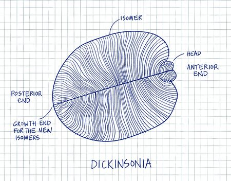Dickinsonia fossil illustration. Ancient fossil from the Ediacaran Period Sketch with blue ink