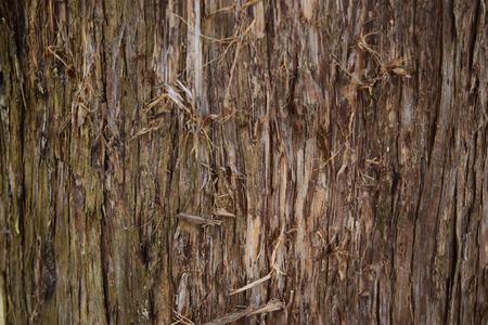 eastern: eastern red cedar bark
