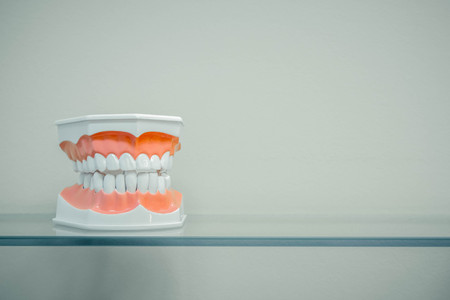 Dental model of teeth is on a glass shelf, light colors Archivio Fotografico