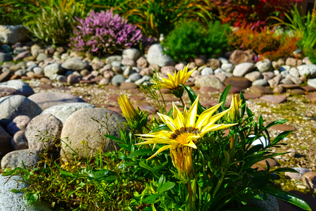 Beautiful landscaping with beautiful plants, flowers and dry stream/ creek bed in garden on sunny day