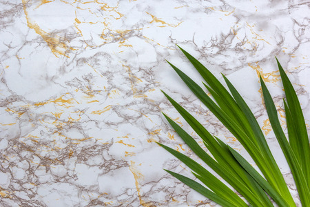 Fresh green tropical leaves on yellow beige white marble background. Flat lay, top view, copy space.