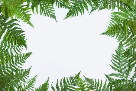 Rahmen aus grünen Farnblättern, Palmwedel auf weißem Hintergrund. Abstrakter tropischer Blatthintergrund, trendiges kreatives Design. Flache Lage, Ansicht von oben, Kopienraum