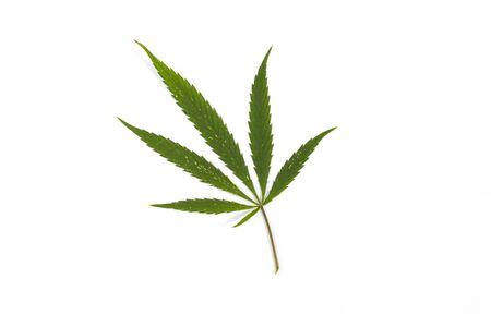 Leaf cannabis, marijuana herb isolated on white background, legalization medical hemp. Stock fotó - 131244625