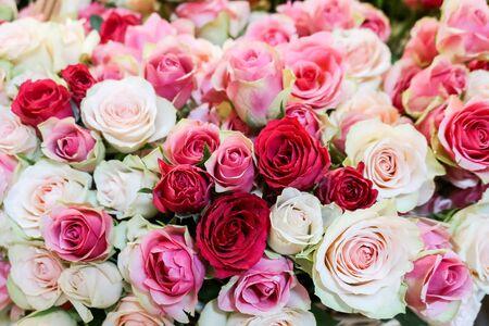 Fondo delle rose naturali fresche nei colori pastelli morbidi rossi rosa-chiaro, fuoco selettivo. Concetto per San Valentino, compleanno, matrimonio