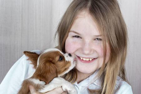 Cute purebred puppy licks face of happy young girl. Royal Cavalier King Charles Spaniel Dog. Stock Photo