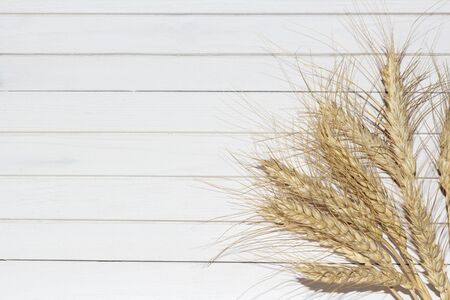 Golden ears of ripe rye, dry yellow cereals spikelets on white wooden background, closeup, selective focus Banque d'images