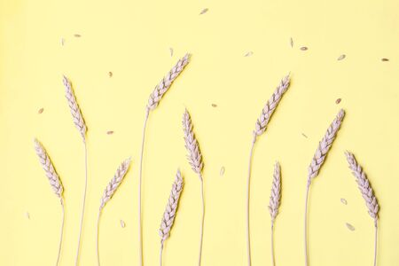Golden wheat and rye ears, dry yellow cereals spikelets in row on light yellow, background, closeup, copy space Фото со стока