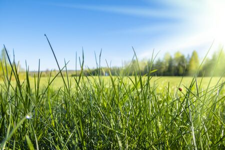 Abstract background of fresh green grass and sun rays. Beautiful natural landscape in spring summer outdoors, copy space.