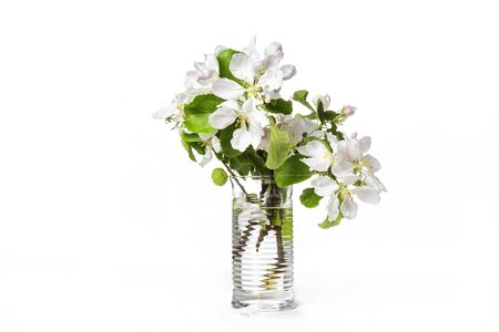 Fresh branch of blossoming apple tree in transparent glass vase isolated on white background Stok Fotoğraf