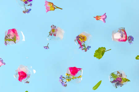 Flying ice cubes with fresh flowers on blue pastel table.