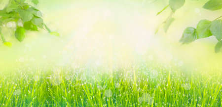 Banner frame of fresh lush green grass with dew drops of water and tree leaves on summer morning in light outdoors sun with natural blurry background. Close-up, wide format, copy space Standard-Bild