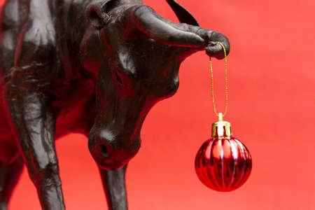 Ox with Christmas ball on horns on red background, banner. Buffalo, bull as symbol of year 2021 to Chinese calendar. Merry christmas and new year greeting card