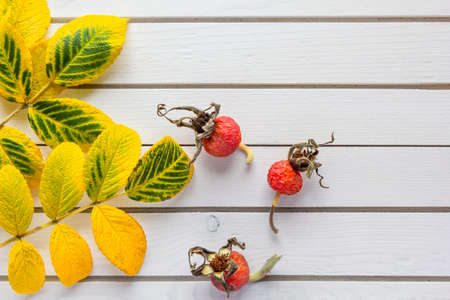 Autumn composition of fallen leaves and rose hips on white wooden background