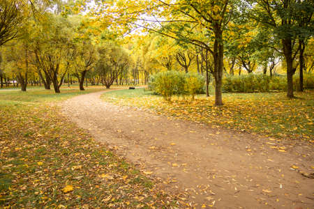 Beautiful autumn landscape with yellow trees, dry orange leaves and sun's rays. Colorful foliage in city park. Falling leaves on natural background 写真素材