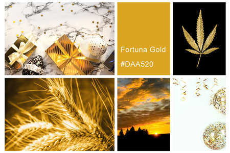 Collage set made of photos toning in Fortuna Gold color. Trendy creative design in color of 2021