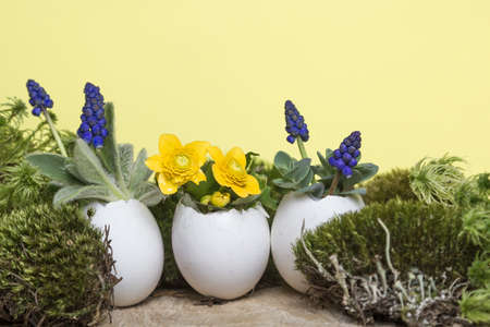 Colorful spring flowers in egg shell flowerpot for Easter on yellow eco background with moss and wooden podium. Easter greeting card concept in trendy minimal style, copy space. 写真素材