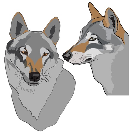 Волк головы