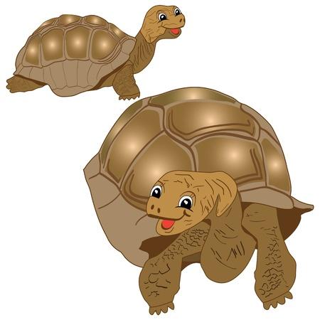 aquatic reptile: Funny Turtles