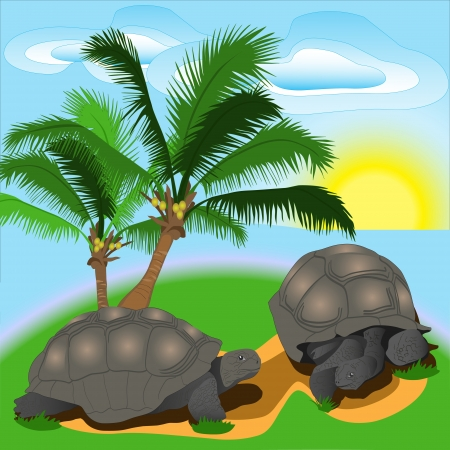 Turtle on the island Illustration