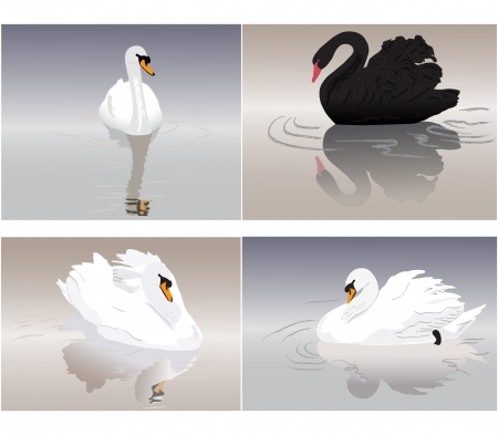 Sea Swans Vector