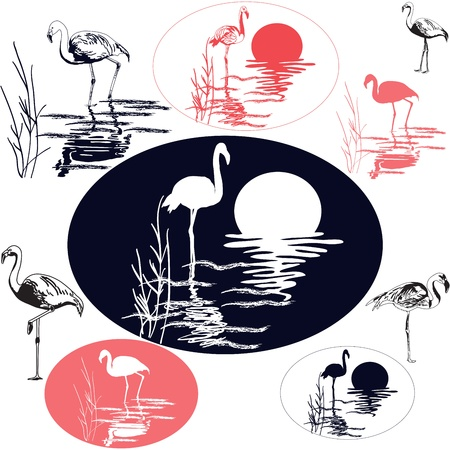Flamingo Silhouettes Stock Vector - 16257794