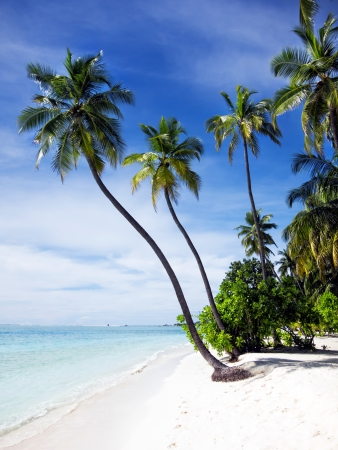 Тропический пляж Фото со стока