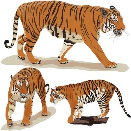 Большой Тигра